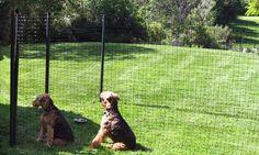 Dog Fence Kits