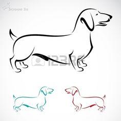 image d un chien teckel sur un fond blanc Banque d'images