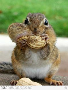 Nuts lover!