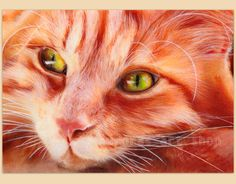 """DRUCK/PRINT """"Through the eyes of a cat """" PASTELL"""