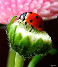 Tiny Lady Bug