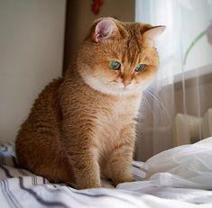 Imagen de animals, kittens, and cats