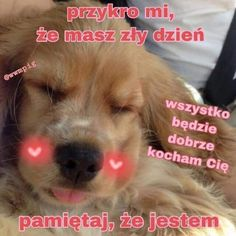 Sweet Memes, Cute Memes, Funny Animals, Cute Animals, Happy Vibes, Wholesome Memes, Reaction Pictures, Cute Love, Pretty Pictures