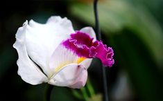 Free stock photo from Hiếu · Pexels Free Stock Photos, Orchids, The Creator, Photoshop, Flowers, Royal Icing Flowers, Flower, Florals, Floral