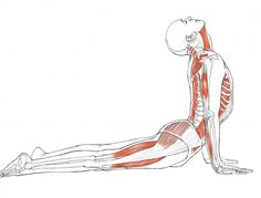Your Body in Upward-Facing Dog – Yoga anatomy expert Leslie Kaminoff explains what happens in your body when you properly perform this backbending posture.