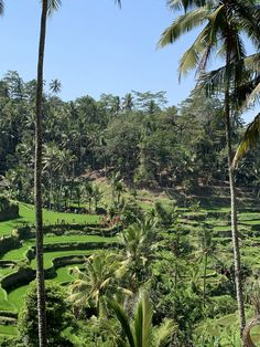 No trip to Bali is complete without an instagram photo of the Tegallalang rice terraces. They are over 700 years old and are on the UNESCO world heritage list