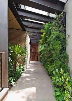Quem sobe a escada vinda do subsolo vê esse corredor, com piso de cimento queimado e pergolado metálico, que tem um jardim na lateral e uma parede verde, criando atmosfera especial (Foto: Maíra Acayaba / Divulgação)