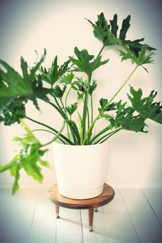 If you are a plant enthusiast or simply like to fill your indoors space with a lot of plants and greenery to refresh the room then you might want to check out how to make yourself a plant stand to nicely space out your plants and make them look even cooler and more beautiful. It is not only very easy but also very fun to embark on a DIY project and spruce up your space and you plants with new and homemade plant stands. There are many different types of plant stands you can build from circle…