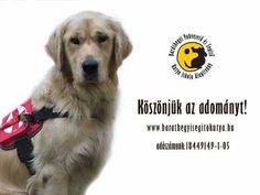 1% a vakvezető kutyákért reklám spot 2010-ből...