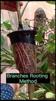 Diy Herb Garden, Garden Planters, Planting Plan, Types Of Soil, Colorful Garden, Plantation, Back Gardens, Cool Plants, Outdoor Plants