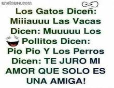 Frases chistosas - Los Gatos Dicen: Miiiaauuuu