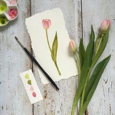 Tulip - watercolor sketch