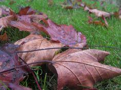 #otoño #hojassecas