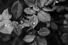 BW Leaf - null