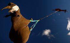 Kommt ein Nashorn geflogen: Hunderte Nashörner werden jedes Jahr in Südafrika...