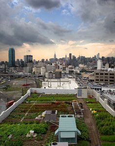 Informative article about rooftop farms.