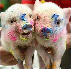 The painting pigs.