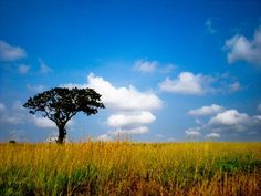 gorgeous African scenery