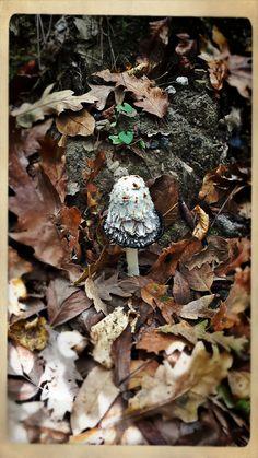 fungus... #naturalmente