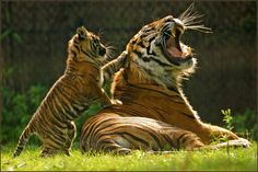 Daddy, you're cool | May 5, 2013 is in Burgers Zoo (Arnhem, … | Flickr