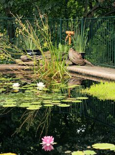 66 best pool to pond conversion and building ponds images - Swimming pool to fish pond conversion ...