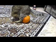 Balloon gets stuck to Cat through Static Electricity - YouTube