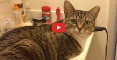 This hilarious cat named Minnie answers back every time her human asks if she's hungry.