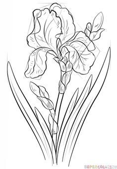 how to draw an iris