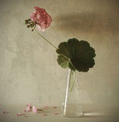 Untitled, photography by Andrei Blank. In Object, Still life.