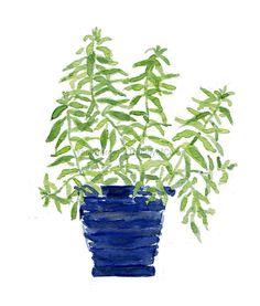 Art print Lemon verbena, :Lemon verbena plant watercolor, herb art, kitchen decor, mothers day, minimalist art, herb art print, kitchen art