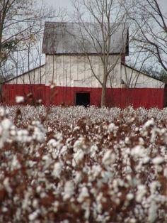 Edgefield Cotton Barn - Edgefield South Carolina SC, photo by Robbie Bellamy of Aiken