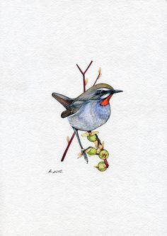 Siberian Rubythroat, Birds, Natalia Komisarova, NatalieStorePainting, You can also find me on: EBAY: http://stores.ebay.com/NatalieStorePainting ETSY: https://www.etsy.com/shop/NatalieStorePainting PINTEREST: https://www.pinterest.com/NatalieStore FLICKR: https://www.flickr.com/photos/nataliestorepainting YOUTUBE: https://www.youtube.com/c/NatalieKomisarovaWatercolor #NataliePaintings #NatalieStorePainting #Quick_sketch #Painting #Birds #watercolor