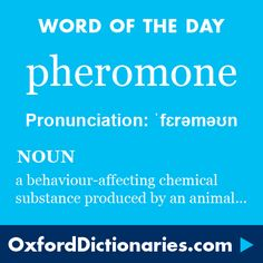 pheromone (noun): A chemical substance produced and released into the environment by an animal, especially a mammal or an insect, affecting the behaviour or physiology of others of its species. Word of the Day for 18 September 2016. #WOTD #WordoftheDay #pheromone