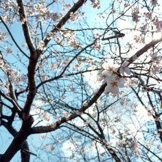 水色  好きな色 好きな空色水の色  nonojikoの淡い水色は 実は好きな人が作った色  水色を意識してたわけじゃないけど 淡さが気に入って作品に絵付けしてた nonojikoの始まりを作ったのは彼だった  すべての作品に水色を使ってないけど 今じゃその淡い水色はnonojikoの色  ふと意識する 桜見上げた向こうの空の色がきれいすぎて  あれから何年経とうとこれからも水色  #空#桜#sky#cherryblossom #水色#空色#nonojiko
