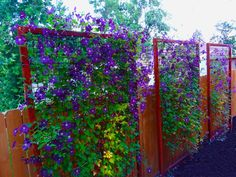 Trellis Metal Trellis Must consider Backyard Privacy also. how to maintain Privacy in backyard landscaping. Backyard landscaping Ideas with privacy Fence or Screen Privacy Fence Landscaping, Privacy Fence Designs, Backyard Fences, Landscaping Ideas For Backyard, Privacy Fence Decorations, Living Privacy Fences, Backyard Garden Landscape, Diy Fence, Clematis Trellis