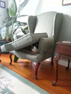 ...even cats like a furniture fort...