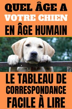 What Age Has Your Canine in Human Age? Right here is the Simple Match Desk. How outdated is your canine in human age? The matching chart simple to learn. Diy Pour Chien, Dog Language, Pet Life, Yorkshire Terrier, Dressage, Good To Know, Funny Dogs, Animals And Pets, Dog Tags