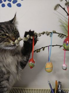 Maine Coon Kater Spirit und der Osterbaum Arts And Crafts, Easter Activities, Cats