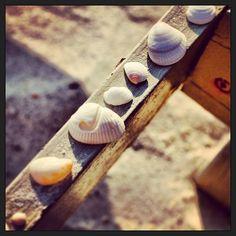 #seashells #st.petes #florida #beach#aubrieoliverfromnyc.tumblr.com