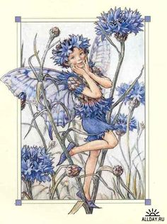 The Cornflower Fairy. Vintage flower fairy art by Cicely Mary Barker. Taken from 'Flower Fairies of the Garden'. Click through to the link to see the accompanying poem. Cicely Mary Barker, Art And Illustration, Vintage Illustrations, Flower Fairies, Fairies Garden, Fantasy Kunst, Fantasy Art, Fairy Pictures, Vintage Fairies