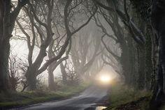 Ireland's Dark Hedges