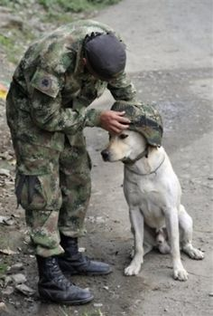 <3 A soldier places his helmet on Timothy, a K9 service dog.