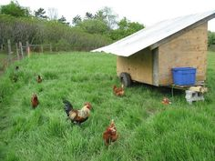 Mobile Chicken Coop with some automation