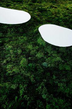 Makoto Azuma - Time of Moss
