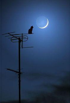 Moon kitty