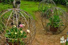 Oli aika: Terkut Turun Piha & Puutarha -messuilta Gardens, Plants, Garden, Flora, Plant, Garden Types, Tuin, House Gardens, Planting