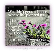 Pin By Chhavi Sharma On Life Quotes Bloom Where Youre Planted Bloom Quotes