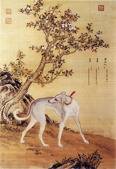 Picture of Cangshuiqiu (苍水虬), a Chinese greyhound, from Ten Prized Dogs Album.