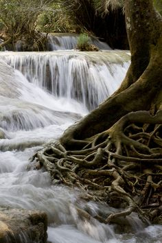 Waterfall Roots, Laos  photo by adrienne