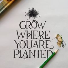 thedailytype Grow where you are planted✨ . From a beautiful work by Doodle Lettering, Brush Lettering, Lettering Design, Typography, Eleanor Roosevelt, Monday Quotes, Life Quotes, Positive Vibes Quotes, Positive Sayings